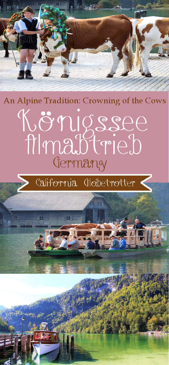 Almabtrieb: An Alpine Tradition - Crowing the Cows at Königssee, Bavaria, Germany - California Globetrotter