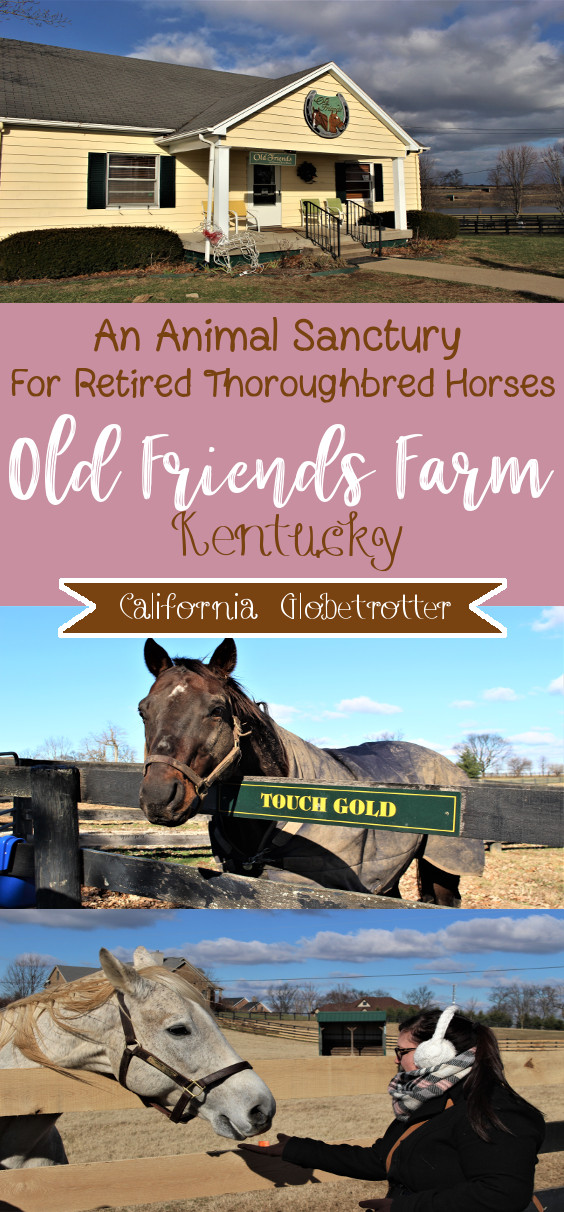 Old Friends Farm: An Animal Sanctuary for Retired Thoroughbred Horses outside of Lexington, Kentucky | Where to Retired Thoroughbred Horses Go? | Horse Sanctuary | Life after Racing | Retired Race Horses | Retired Thoroughbred Race Horses | Famous Race Horses | Stop Horse Slaughter | Help Protect Thoroughbred Horses #Kentucky #KentuckyDerbyWinners - California Globetrotter
