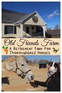 Why Everyone SHOULD Visit Old Friends Farm, Georgetown, Kentucky - California Globetrotter