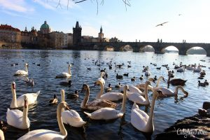Celebrating 5 Years in Germany - Prague - California Globetrotter