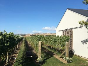 Amazing Alcohol Related Trails Around the World - New Zealand's North Island Wineries - Martinborough - Two Feet, One World - California Globetrotter