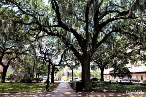 Savannah's Oak Trees Covered in Spanish Moss | A Busy Bee's Guide to Savannah, Georgia | Things to do in Savannah | 24 hours in Savannah | Savannah City Guide | Savannah Itinerary | Getting Around Savannah | Where to Eat in Savannah | Savannah Historic District | Downtown Savannah | #Savannah #Georgia #TravelUSA - California Globetrotter