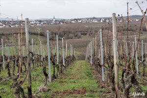 Christmas Wine Tasting & Tour with Bottle Stops | Steinberg Keller | Kloster Eberbach | Vineyards & Wineries in Germany | Wine Tasting & Pairing | Wine Tours in Germany | German Wine Tours | Rhein River Wine Tours & Tastings | #Rhein #RheinWine #Germany - California Globetrotter